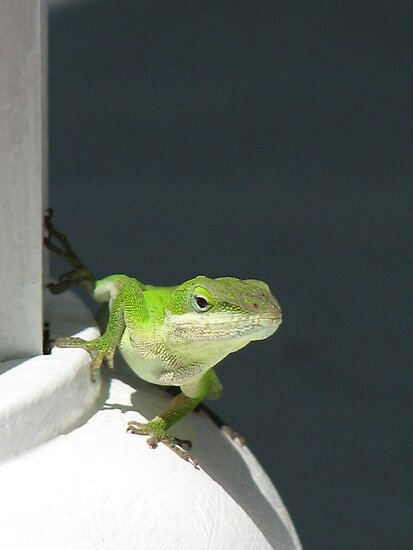 Anole Lizard Colonial Style by JeffeeArt4u