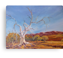 Magic tree in Flinders Ranges, South Australia Canvas Print