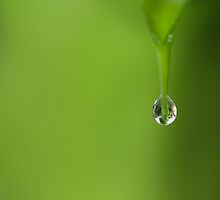 A Drop of Green - The Lens in Water by dahon