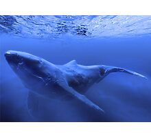 Whale In the blue Photographic Print