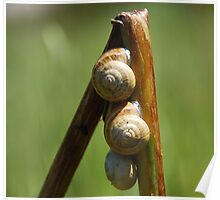 Snails on a stalk. Poster