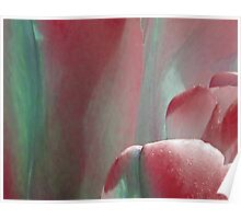 Tulip - red Poster