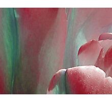 Tulip - red Photographic Print