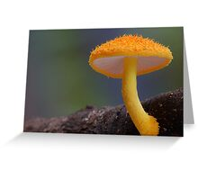 Gold Tuft Greeting Card