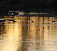 Sunset Reflections On The Murray River by MissyD