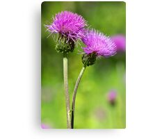 Meadow Thistles Canvas Print