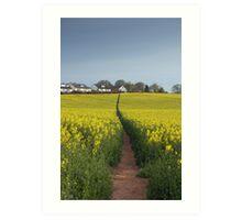 Brassica napus path Art Print