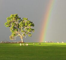 Rainbow Sheep - Albany - Western Australia by Ruth Tinley