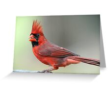 Northern Cardinal on an April Evening Greeting Card