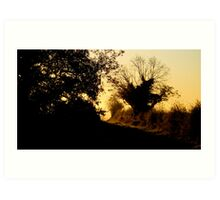 Golden sunrise in the branches Art Print