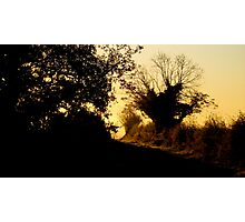 Golden sunrise in the branches Photographic Print