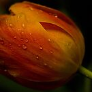 Glow after the Rain by ElyseFradkin