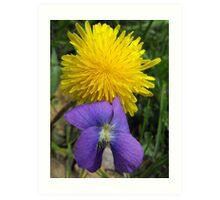 Early Blue Violet- Viola adunca and Common Dandelion - Taraxacum officinale- Two Edible Wildflowers Art Print