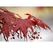 Raindrops on leaves Photographic Print