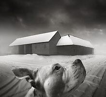 .dreams I. by Michal Giedrojc