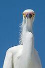Staring Egret by Eivor Kuchta