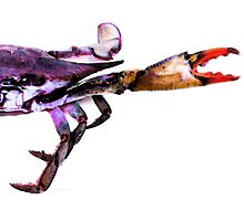 Half Crab - The Right Side by Sharon Cummings