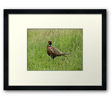Archie - a very Pleasant Pheasant Framed Print