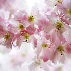 Pink Blossoms by Tabita Harvey