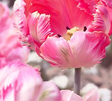 Fancy Frills Tulip by FizzyImages