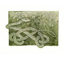 The Green Tree Snake Photographic Print