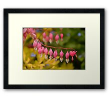 Bleeding Hearts Macro Framed Print