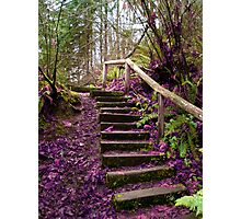 Purple Staircase Photographic Print