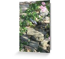 Warm Spring Morning - Blue Jay Sips Water  Greeting Card