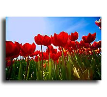 Spring in Holland  Photographic Print