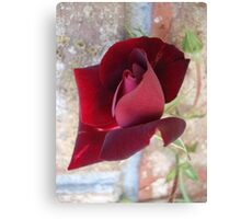 Ed's Rose Canvas Print