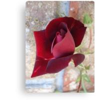 Ed's Rose Canvas Print