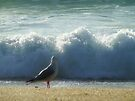 """'Watchin' the Tide Rollin' away"""" by debsphotos"""