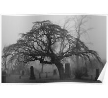 Foggy Resting Place Poster