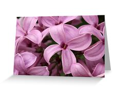 Lilac Blooms Greeting Card