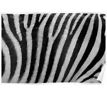 Zebra Texture Poster