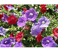 Flowers of Italy Photographic Print