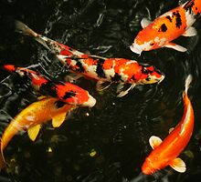 Fish, Tokyo Japan, 2010 by Brad Starks