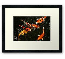 Fish, Tokyo Japan, 2010 Framed Print