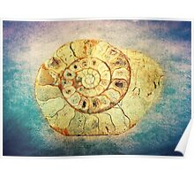 The Shell - Fibonacci (The Golden Spiral) in Nature Poster