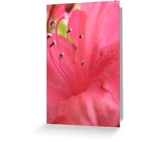 Another Azelea bloom Greeting Card