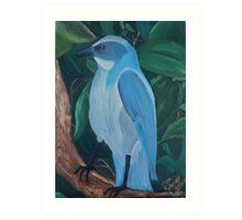Florida Scrub Jay Art Print