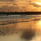 """""""Sunset - Beadnell Bay - Northumberland by Diane Thornton"""