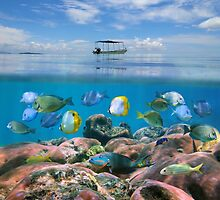 Boat above a coral reef with shoal of fish underwater by Dam - www.seaphotoart.com