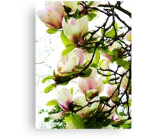 Beautiful Bower! Canvas Print