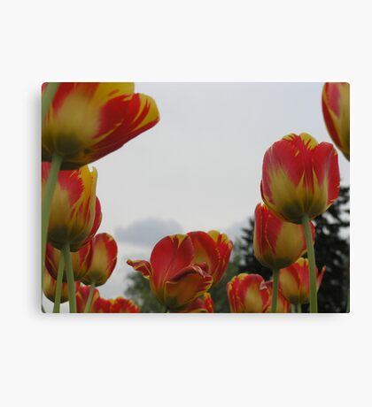Swimming in the Sea of Your Colors Canvas Print