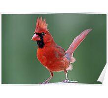 Dandy Mr. Redbird Poster