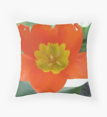 Orange and Lemon-aided Tulip Throw Pillow