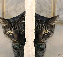 Peek-a-boo kitty  X 2 by TeAnne