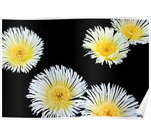 White flowers 8519 Poster