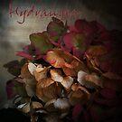 Hydrangea by Rosalie Dale